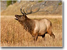 Colorado Hunting Outfitters and Guides